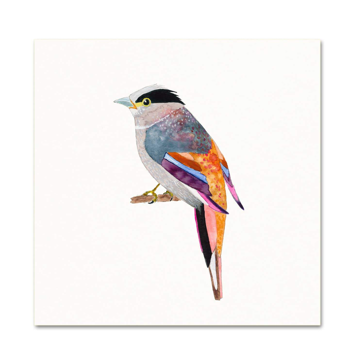 Silver-Breasted Broadbill art print Snoogs & Wilde Art
