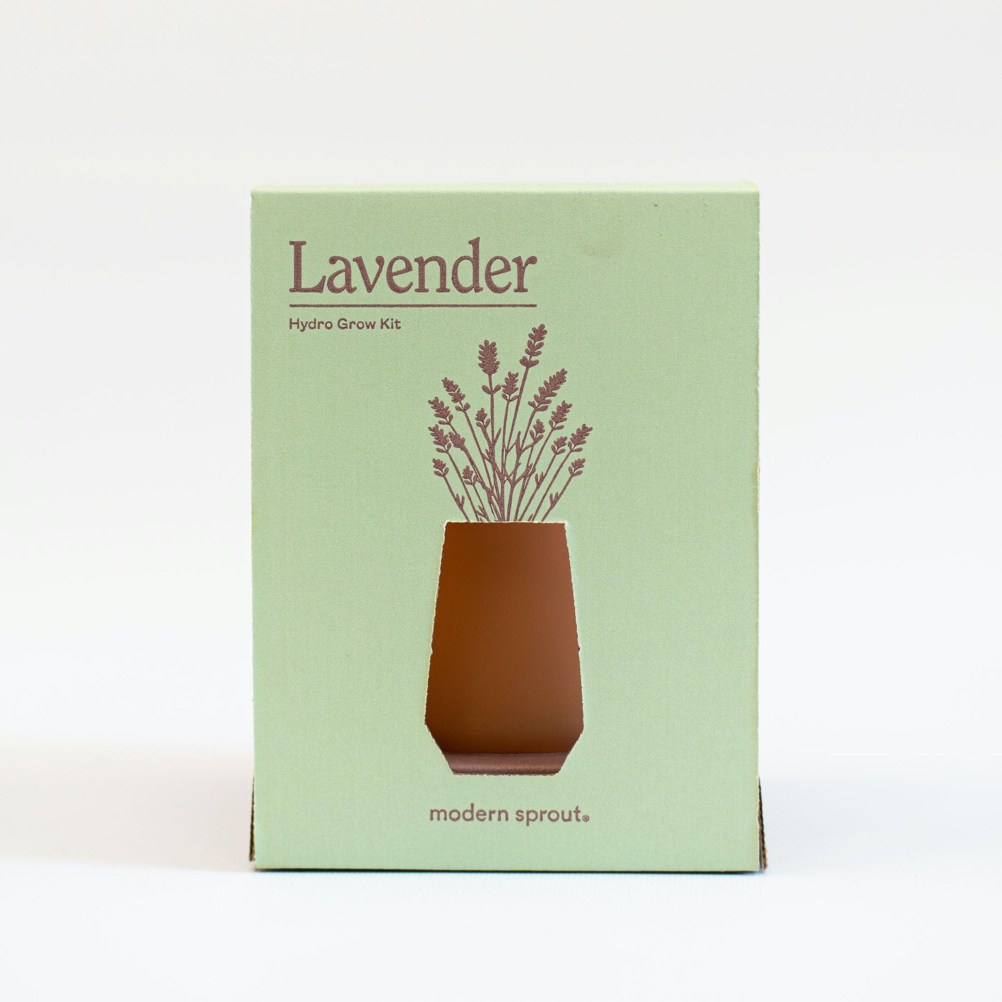 Grow Your Own Lavender plant Modern Sprout