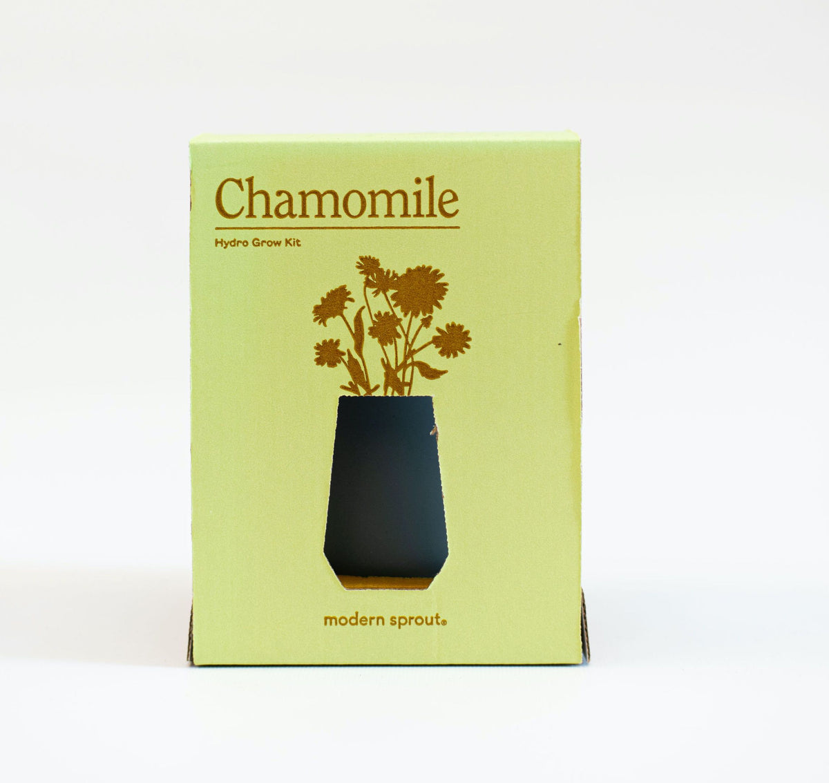 Grow Your Own Chamomile plant Modern Sprout