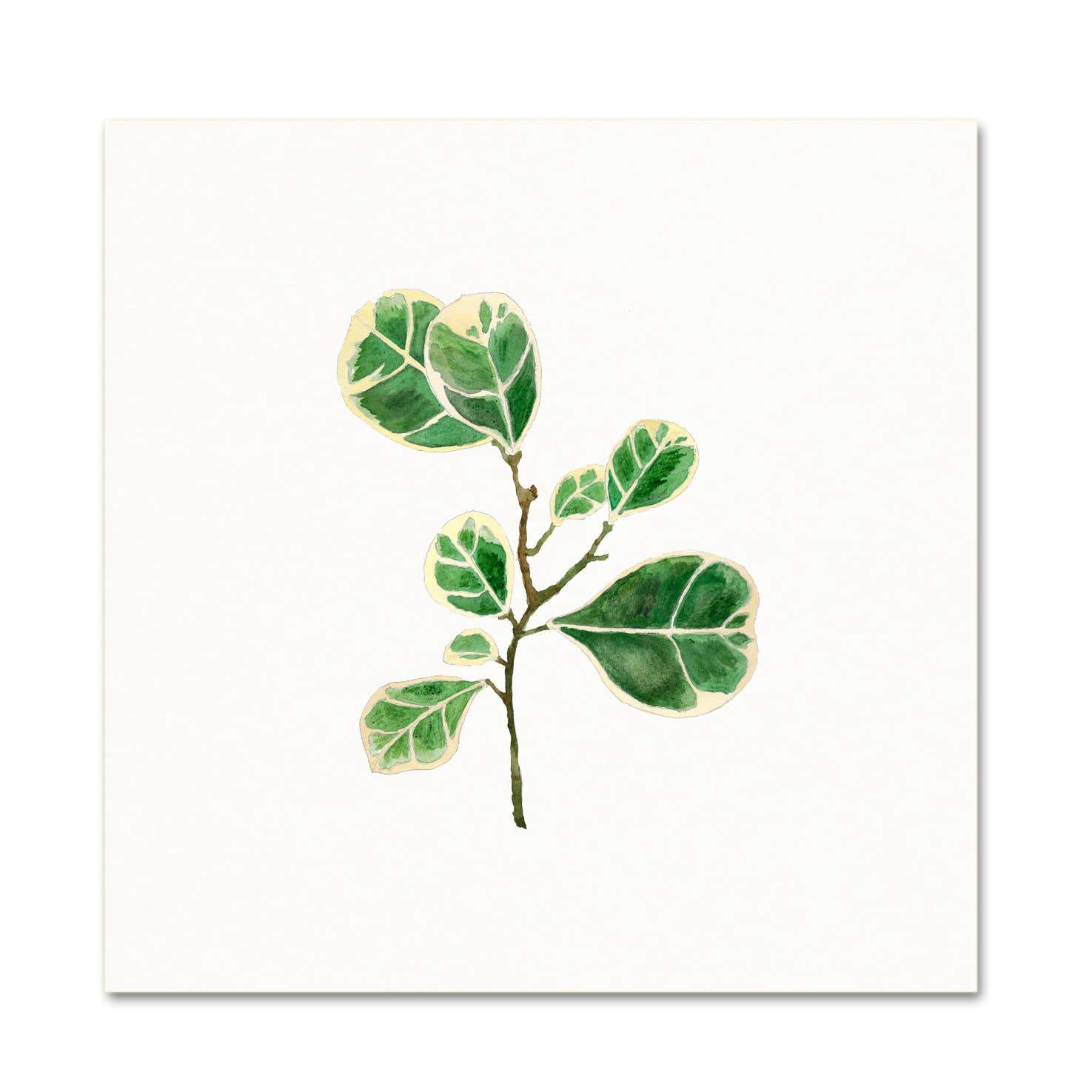 Ficus ~ Art Print Snoogs & Wilde Art