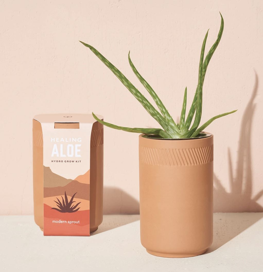 Grow Your Own Aloe plant Modern Sprout