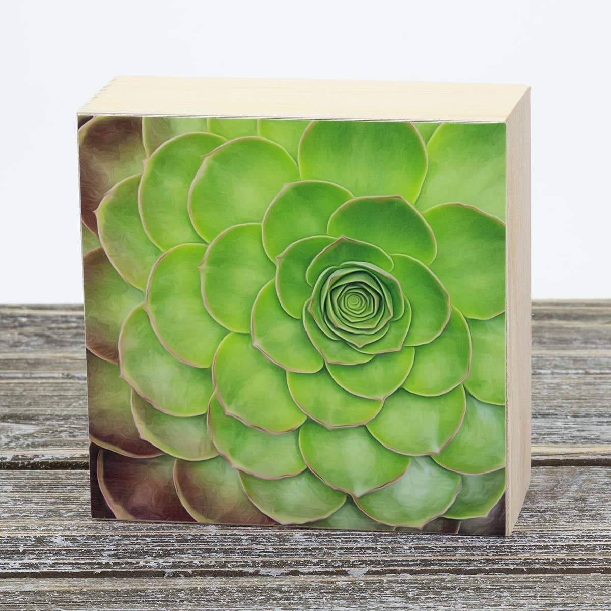 Succulent Aluminum Photo on Wood Block art print ANVIL metals studio
