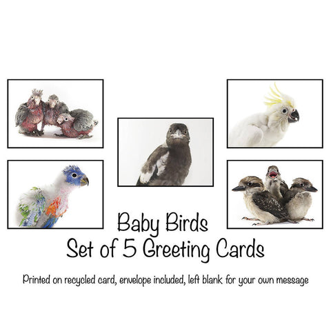 Baby Birds - Set of 5 Greeting Cards