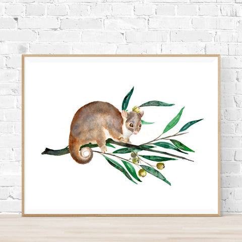Ringtail Possum Print