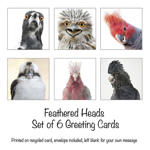 Feathered Heads - Set of 6 Greeting Cards