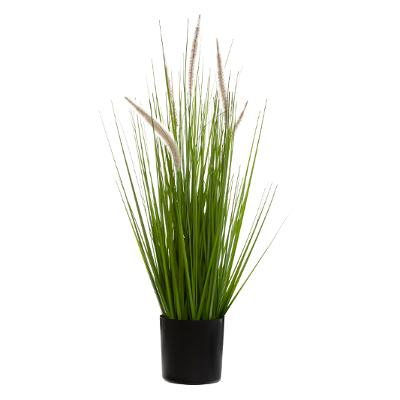BUNCH HERBE + CAT TAILS H70