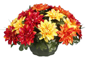 COUPE DAHLIAS H.35
