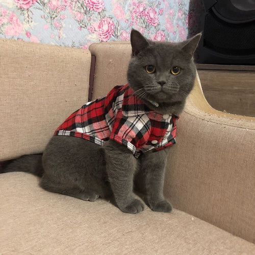 Plaid Cat Clothes Summer Fashion