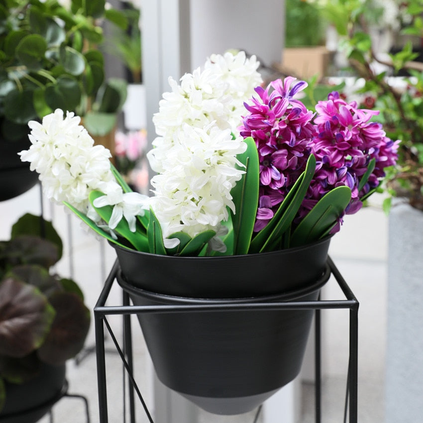 Garden Bulbs Silk Hyacinth Plant