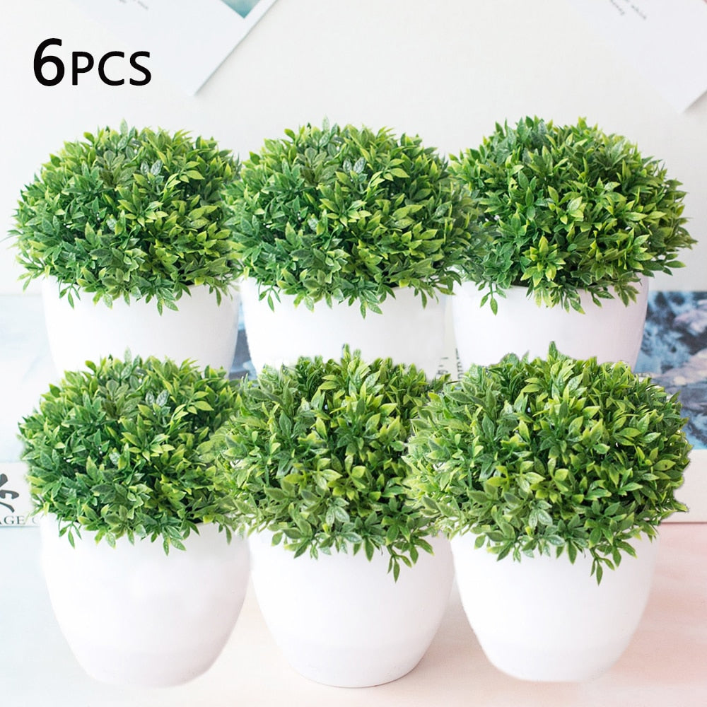 Indoor Small Tree Bonsai Plant (6 PCS)