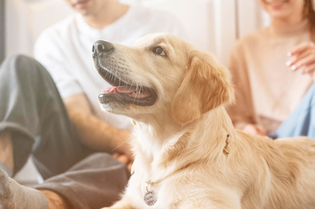 Primabee Premium CBD for dogs and pets blog post