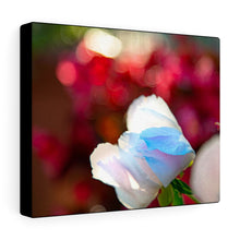 Load image into Gallery viewer, White & Red Roses