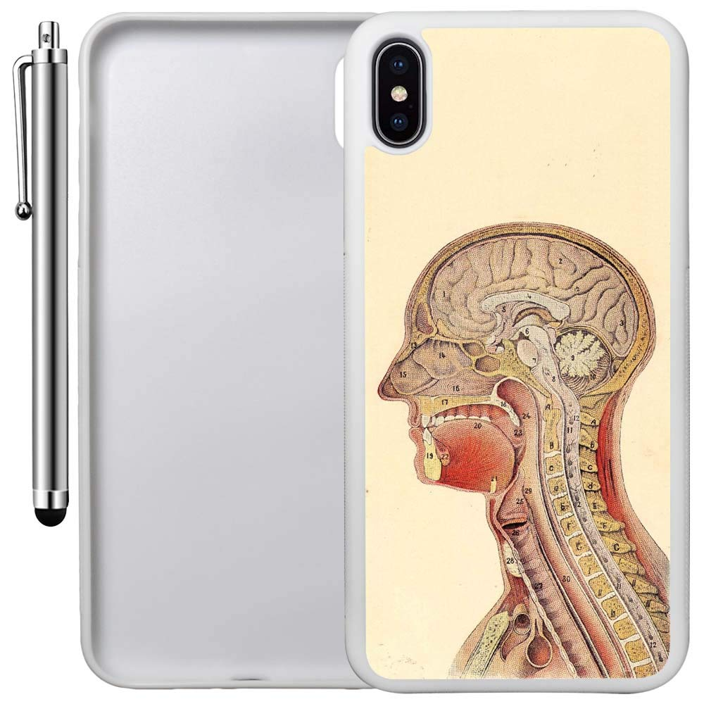 Custom Case Compatible with iPhone Xs MAX (6.5 inch) (Human Anatomy Cross Section) Edge-to-Edge Rubber White Cover Ultra Slim | Lightweight | Includes Stylus Pen by Innosub