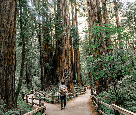 man staring up at giant tree
