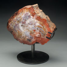 Load image into Gallery viewer, Geo Rarities - Arizona Rainbow Petrified Wood Polished on Both Sides (Museum Quality)