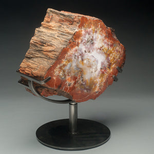 Geo Rarities - Arizona Rainbow Petrified Wood Polished on Both Sides (Museum Quality)