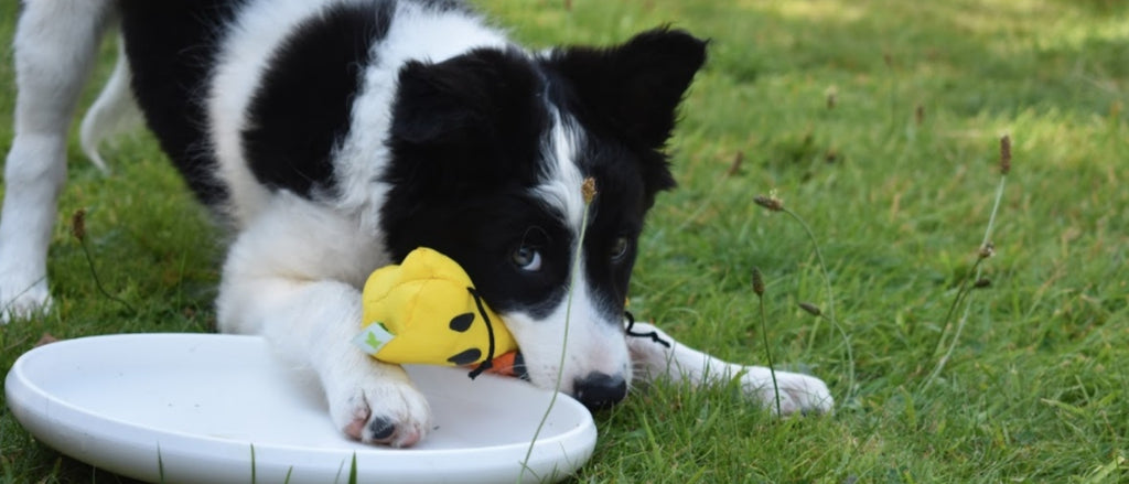 How to Choose and Use the Right Dog Toy