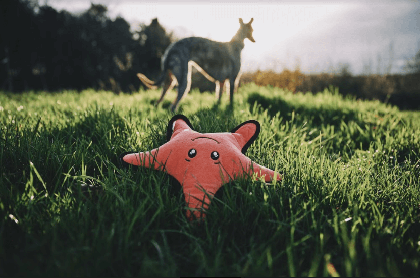 Outdoor games to play with your dog