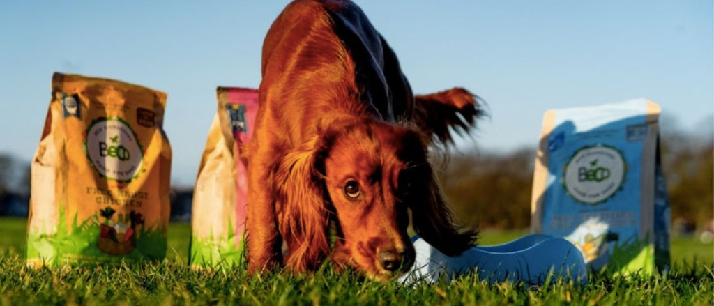 is grain free dog food bad for puppies?