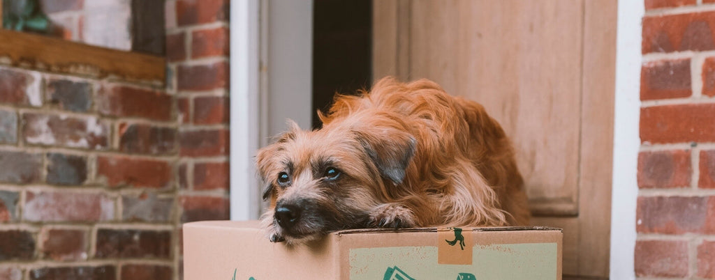 reasons for your dog pooping in the house suddenly
