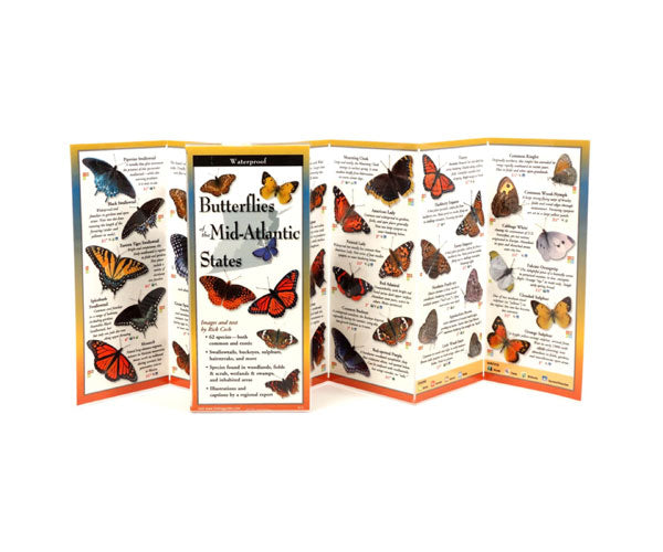 Butterflies of the Mid Atlantic States