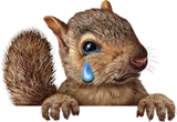 Crying Squirrel
