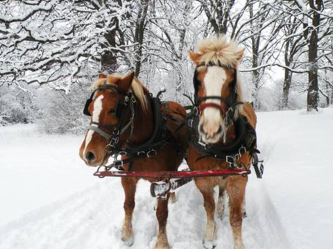 Maple Meadow Farms holiday open house December 4 5 6 2015 Maine made craft fair, Christmas trees, wreaths, kissing balls, wagon rides, tours & more