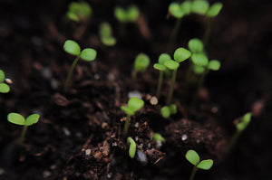 Sprouting: Why we resist transformation