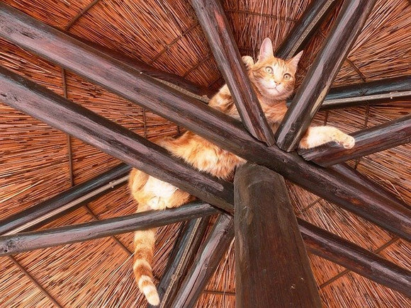 cat stuck in top of umbrella style roof