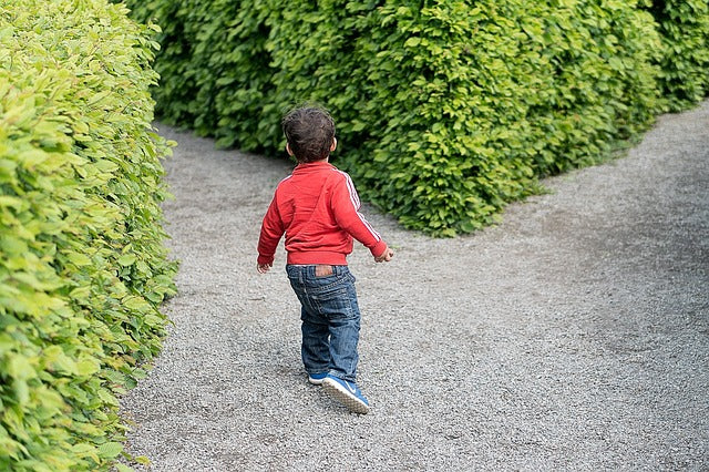 small child facing crossing road of pathways among tall hedges