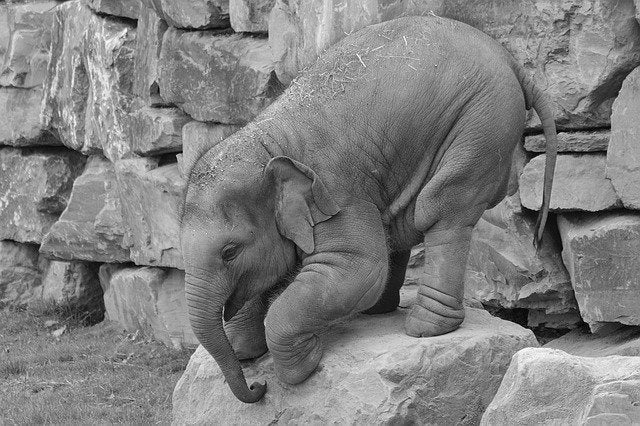 baby elephant trying to get off big rock