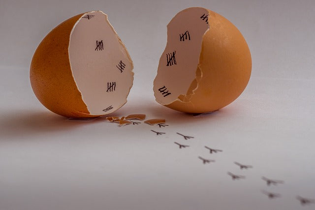 broken egg shell with bird footprints leading away from it