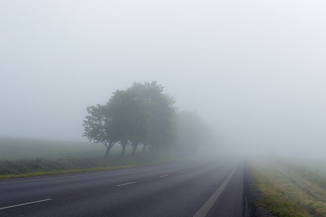 road lined with trees and fields heading into thick fog