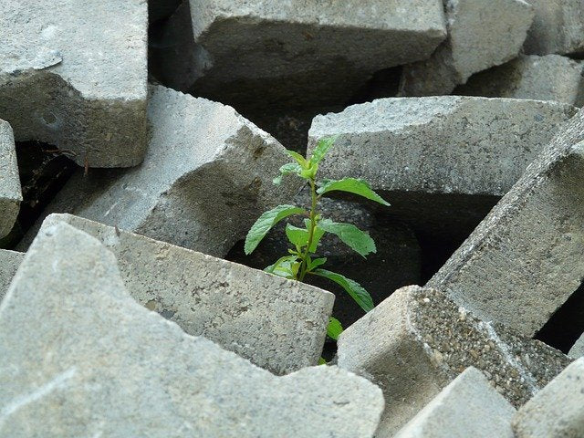 tiny tree growing out of rubble