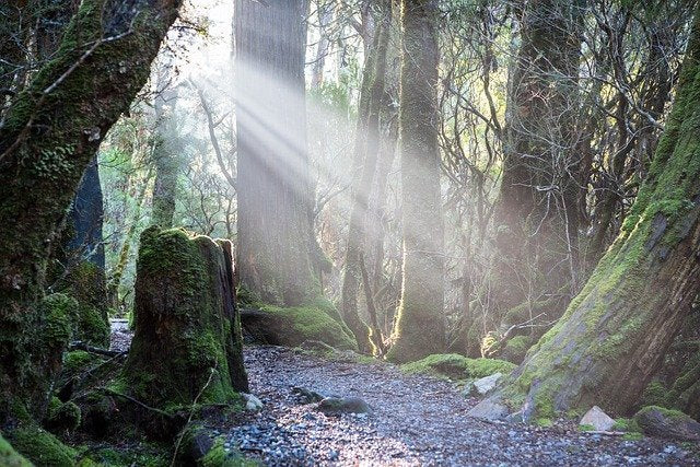 path in forest with beam of sunlight shining on path