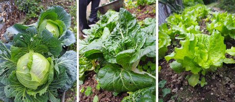 Homegrown Vegetables from Soulistic Farm