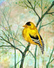 Golden Finch Mixed Media Painting, Prints and Greeting Cards