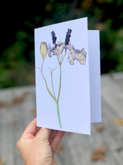 Blackberry Lily : Greeting Card
