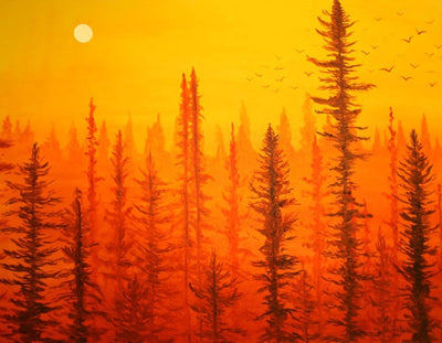Forest at Dawn : Greeting Card