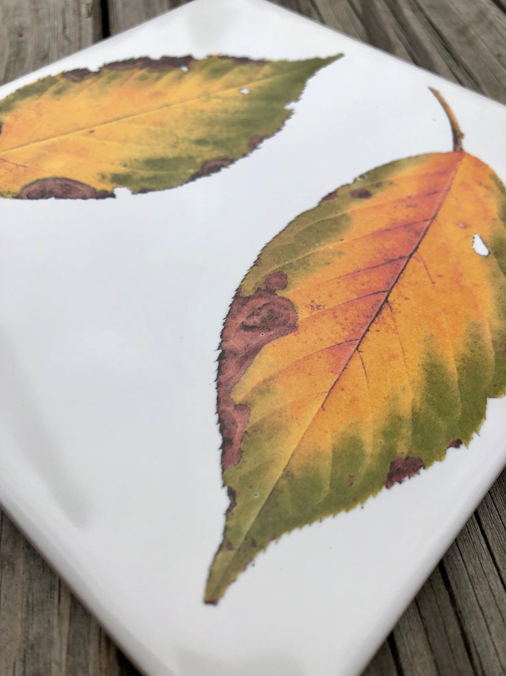 Fall Dogwood Leaves Ceramic Tiles : Indoor and Outdoor Use