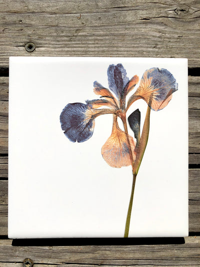 Pressed Iris Ceramic Tile - Indoor and Outdoor Use
