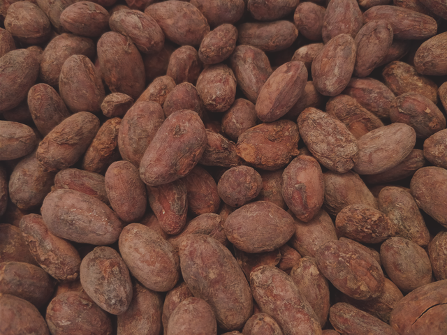 Roasted Cocoa beans from Peru