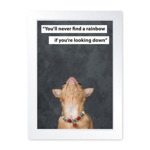 You'll Never Find A Rainbow If You're Looking Down, Chihuahua, Framed Print