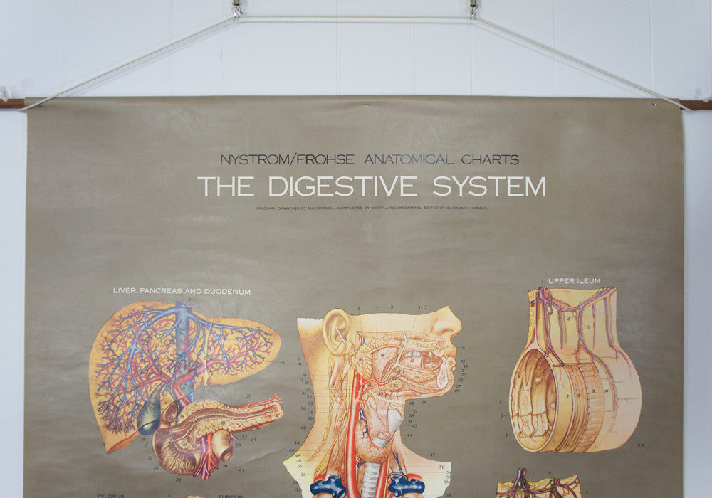 1950's Frohse Digestive System Anatomy Wall Chart
