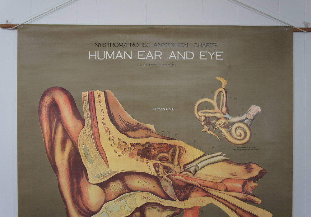 1950's Frohse Human Ear & Eye Anatomy Wall Chart