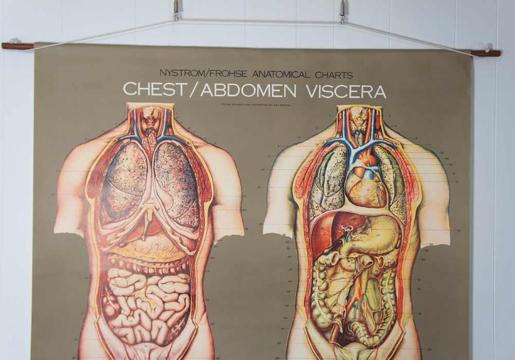1950's Frohse Chest & Abdomen Viscera Anatomy Wall Chart