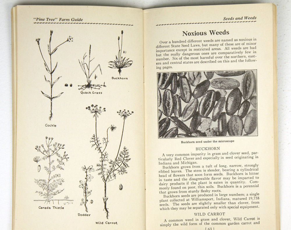 Pine Tree Farm Guide (1935)