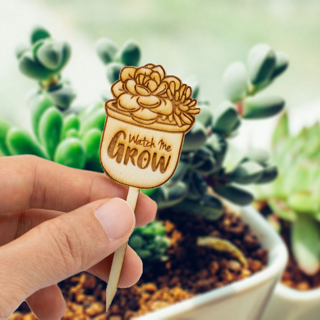 Mini Wooden Watch Me Grow Signs For Baby Shower Cactus Succulent Favor Summer Ray Com