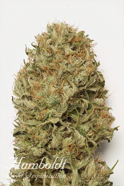 HSO - Blue Dream, Auto (5 pack)