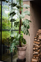 Faux Monstera Plant | Silk-ka Philodendron | DutchFurniture.com